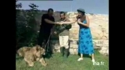 حمله شیر به گزارشگر زن