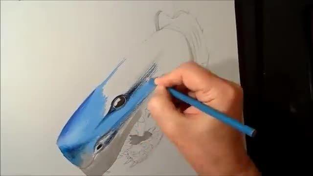 خلاقیت هنر در کشیدن سه بعدی  نقاشی کوسه