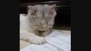 گربه درس خون