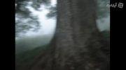 صدای زیبای جنگل(جنگل نوردی تنکابن)