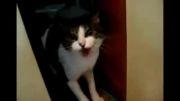 عاقبت ورود به حریم گربه !!
