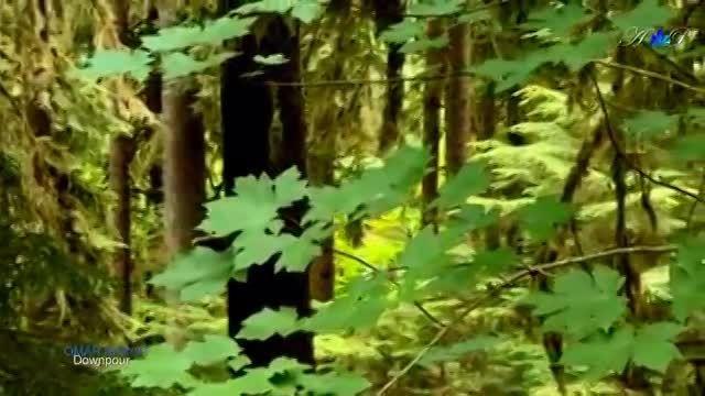 ✿ ♡ ✿ OMAR AKRAM - Downpour (New album Daytime Dreamer