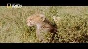 مستند حیوانات 8