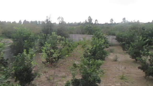 باغ و ویلا در شمال
