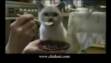 گربه های خارق العاده
