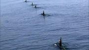 قدرت نیرو دریایی ارتش ایران