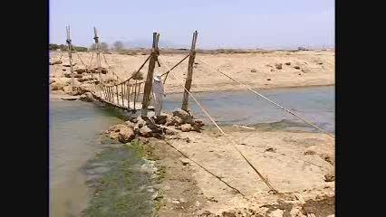 کشاورزی با آب دریا (گیاه سالیکورنیا)  تولید روغن، علوفه