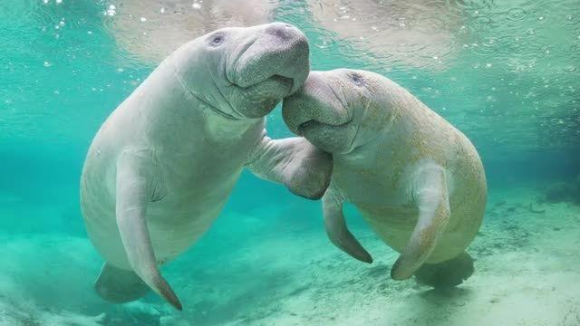 Stunning Photos of the Endangered Everglades