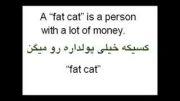 """A """"FAT CAT"""""""