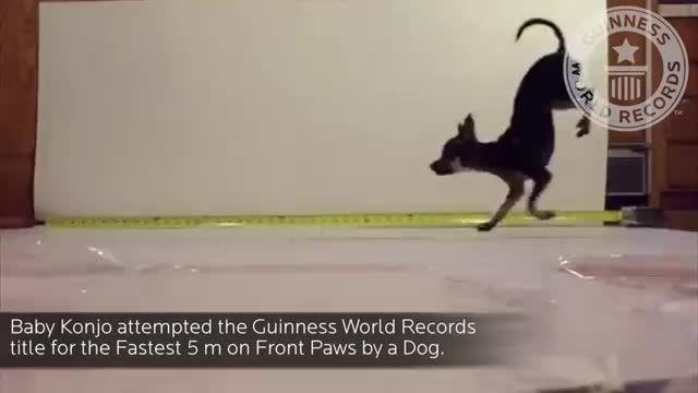 رکورد سریعترین سگ دنیا