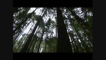 ویدیو انگیزشی خود را رها کن از الن واتس