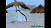 خطرناک ترین ها - عقاب قدرتمند یا مار کشنده؟
