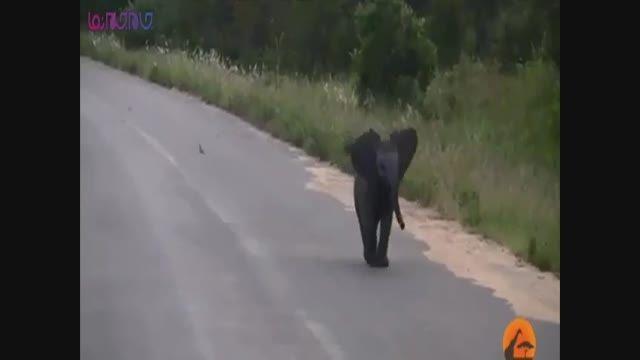 ذوق زده شدن بچه فیل شاد فیلم کلیپ گلچین صفاسا