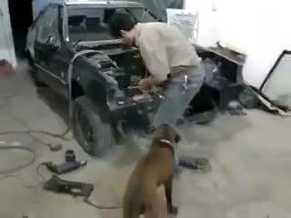 سگ تعمیرکار که در صافکاری مشغول به کار است