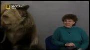 حمله خرس در برناهه زنده