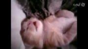 بچه گربهه خواب بد می بینه، مامانش بغلش میکنه