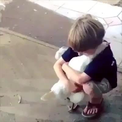 رابطه پسرکوچولو با یک مرغ !