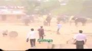 حمله فیلها در جشنواره کرالا در هند