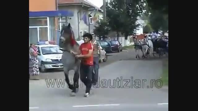 آخ آخ آخ.....دیگه با دم اسب بازی نکن ها