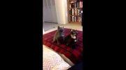 سرکار گذاشتن گربه