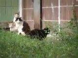فرار گربه از موش