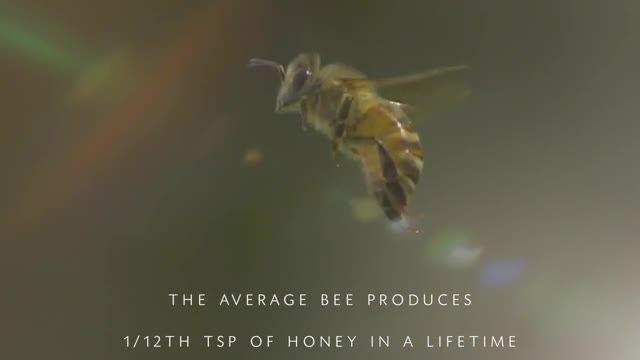 دنیای زیبای زنبور عسل