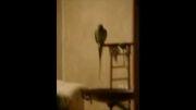 پیکاسو طوطی سخنگو