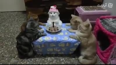 گربه هایی که جشن تولد میگیرن
