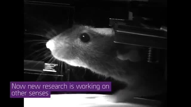 هدست واقعیت مجازی برای موش ها