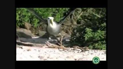 عجائب خلقت؛ پرندگان چگونه پرواز می کنند؟