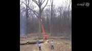 حوادث در بریدن شاخه درختان جنگل با اره برقی