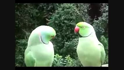 حرف زدن بامزه طوطی!!