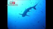 راهنمای گردشگری سریلانکا و جزایر مالدیو - رها فیلم