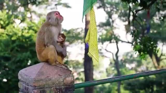 ویدیویی بسیار زیبا و دیدنی از بازی میمون ها بازیگوش ♥