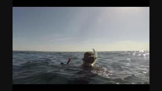 صید ماهی شیر در جزیره کیش با نیزه-کوسه-شکار