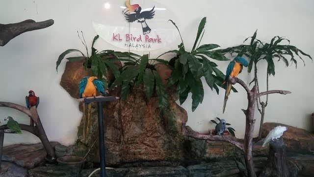 گلچینی از پرندگان زیبا و رنگارنگ در پارک پرندگان مالزی