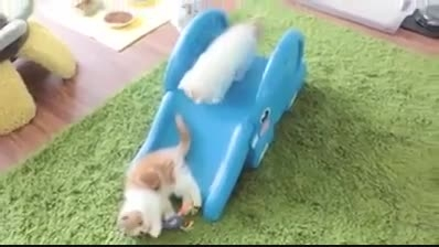 سرسره بازی بچه گربه ها!!