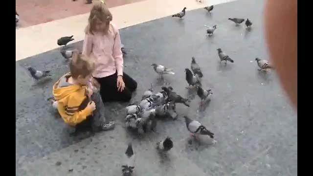 پرندگان در بارسلونای اسپانیا (2)