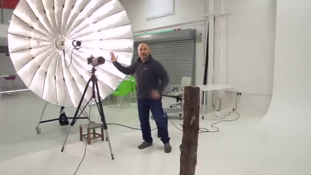 عکاسی از یک پرنده (قوش یا عقاب) در استودیو عکاسی