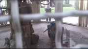 طوطی های وحشی(ماکائو)