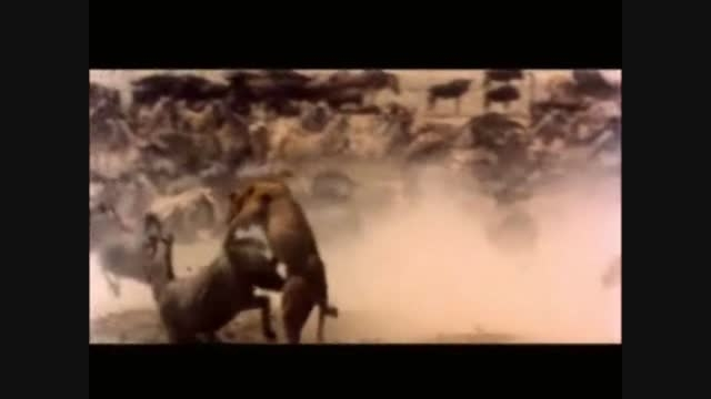 برترین ویدیو کلیپ سال (محیط زیست)