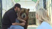 غذا دادن به خرس گنده ی گریزلی