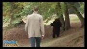 دوربین مخفی - مبارزه با خرس خیلی باحاله