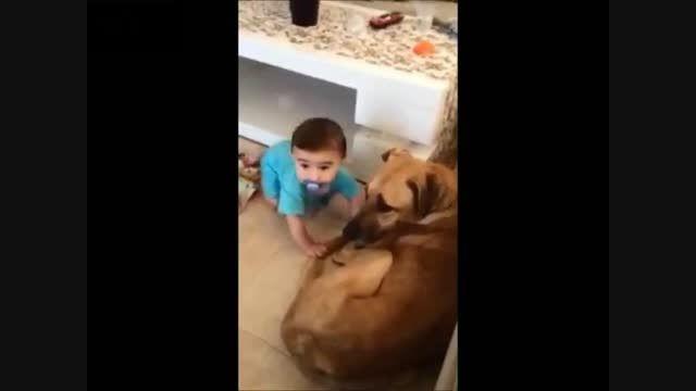 حمله سگ به سر بچه