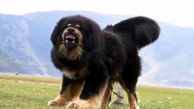 10 سگ نگهبان برتر دنیا