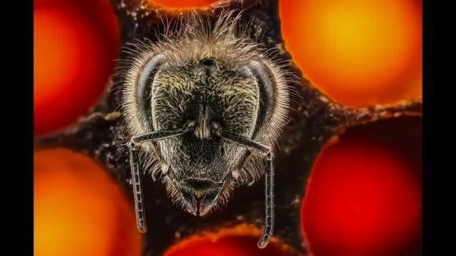 نگاهی هیجانی به 21 روز اول زندگی زنبورعسل