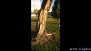 کنده کاری روی درخت