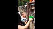 خنده های خیلی خیلی باحال کودک!...نبینی ضرر کردی!