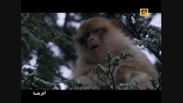 مستند آفریقا با دوبله فارسی -  ساهارا