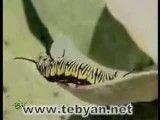 حیات وحش استان بوشهر